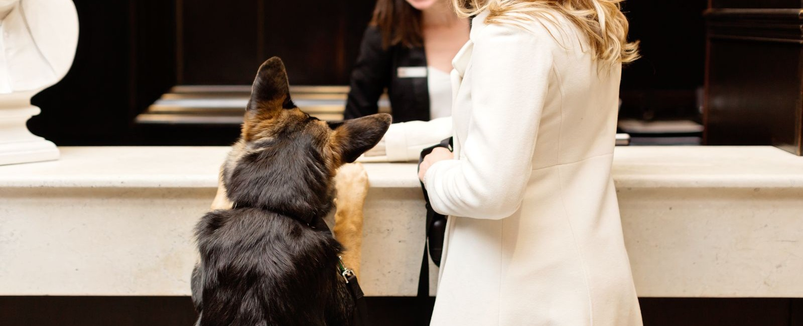 German Shepard dog at the check in desk along side his woman owner.