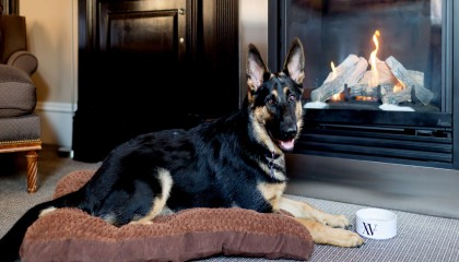 German Shepard dog laying on one of our dog bed in front of the guestroom gas fireplace with our signature dog bowl