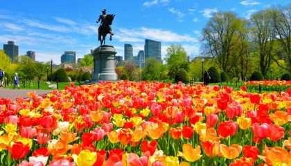 Photo of the Boston Common during Spring with Red and Yellow Tulips