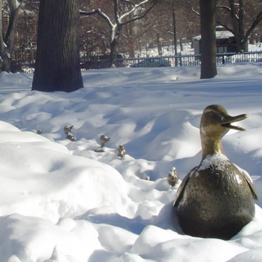 winter ducklings in Boston Common